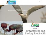 birdwatcing and birding tour in Itay